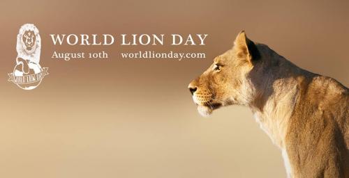 """Résultat de recherche d'images pour """"journée mondiale du lion"""""""